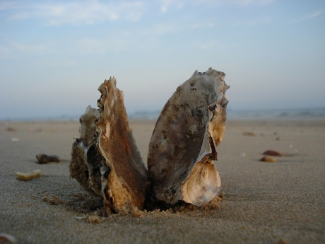 Photo Credit: Oyster Shell, by IvanWalsh.com
